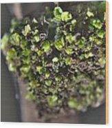 Plant Mutation Wood Print