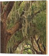 Plantation Oak Trees Wood Print