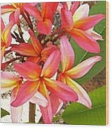Plantation Plumeria Wood Print