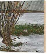 Plantgrasscomp 2009 Wood Print