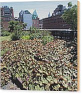 Plants And Flowers On The High Line Wood Print