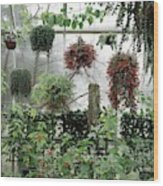 Plants Hanging In A Greenhouse Wood Print