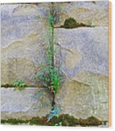Plants In The Brick Wall Wood Print