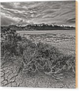 Plants On The Alvord Desert Wood Print