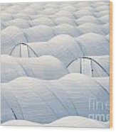 Plastic Sheet Greenhouses To Grow Veggies Wood Print