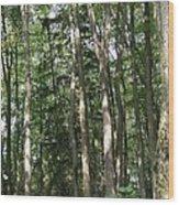 Plate River No 1 Wood Print