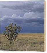 Plateau Cholla New Mexico Wood Print