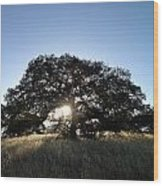 Plateau Oak Tree Wood Print