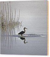 Platinum Heron Wood Print by Skip Willits