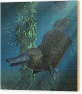 Platypus Wood Print