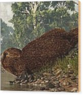 Platypus On The Shore Wood Print