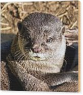 Play Time For Otters Wood Print