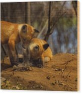 Play Time Wood Print by Thomas Young