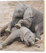 Playful Elephant Calves Wood Print