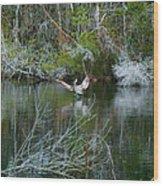 Playful Pelican Wood Print