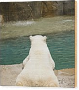 Playful Polar Bear Wood Print by Adam Romanowicz