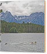 Playing In Colter Bay In Grand Teton National Park-wyoming Wood Print