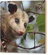 Playing Possum Wood Print