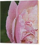 Pleasantly Pink  Wood Print