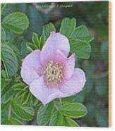 Pleasing Pink Wood Print