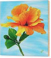 Pleasure - Yellow Double Hibiscus Wood Print