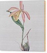 Pleione Zeus Wildstein Wood Print