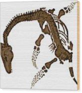 Pleisiosaurus, Mesozic Marine Reptile Wood Print