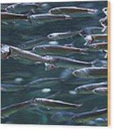 Plenty Of Fish In The Sea Wood Print