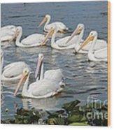 Plenty Of Pelicans Wood Print