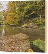 Plessey Woods And The River Blyth Wood Print