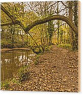 Plessey Woods Riverside Footpath Wood Print