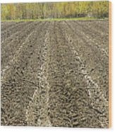 Plowed Spring Farmland Ready For Planting In Maine Wood Print