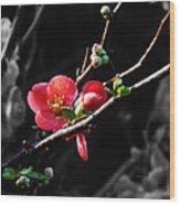 Plum Blossom 3 Wood Print
