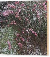 Plum Blossom In The Snow Wood Print
