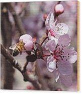 Plum Blossoms 12 Wood Print