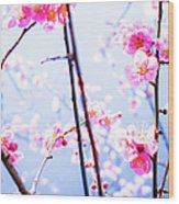 Plum Blossoms In Bloom Wood Print