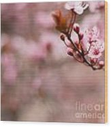 Plum Flower On Branch - Spring Concept Wood Print
