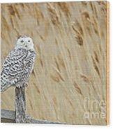 Plum Island Snowy Owl On A Fence Post Wood Print