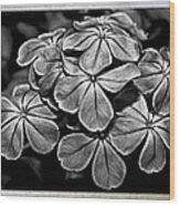 Plumbago In Gray Wood Print