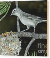 Plumbeous Vireo With Four Chicks In Nest Wood Print