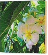 Plumeria Beauty Wood Print