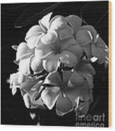 Plumeria Black White Wood Print