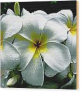 Plumeria Bunch Wood Print