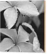 Plumeria Drip Wood Print