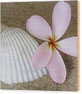 Plumeria Flower And Sea Shell Wood Print
