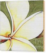 Plumeria Flower Wood Print