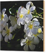 Plumeria Glow Wood Print