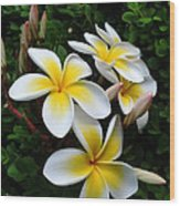 Plumeria In The Sunshine Wood Print