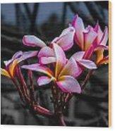 Plumeria Rainbow Ali Wood Print