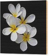 Plumerias Isolated On Black Background Wood Print